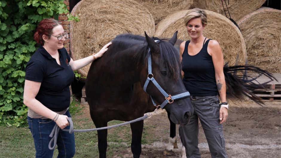 Horse-Assisted Training für Lehrlinge